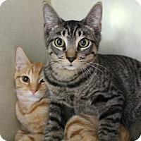 Adopt A Pet :: Tozer - Chicago, IL