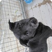 Adopt A Pet :: SlimJim - New palestine, IN