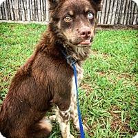 Adopt A Pet :: Juniper - Fredericksburg, TX