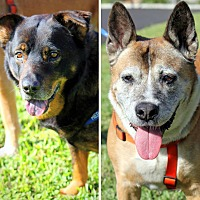 Adopt A Pet :: Hershey & Snickers - Ft. Lauderdale, FL