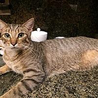 Adopt A Pet :: Landon - Metairie, LA