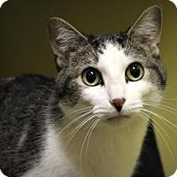 Adopt A Pet :: Cooper - West Des Moines, IA