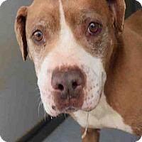 Adopt A Pet :: Wally - Newnan City, GA