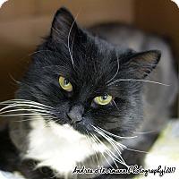 Adopt A Pet :: Cindy Lou - East Hartford, CT