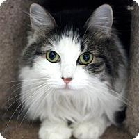 Adopt A Pet :: Lily - Dalton, GA