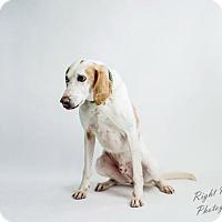 Adopt A Pet :: Cody - North Myrtle Beach, SC