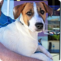 Adopt A Pet :: Lexi - Madison, AL