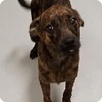 Adopt A Pet :: Nehi - Avon, NY