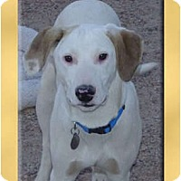 Adopt A Pet :: Clyde - Scottsdale, AZ
