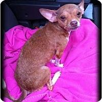 Adopt A Pet :: Jona - Fowler, CA