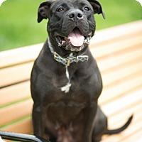 Adopt A Pet :: Swiss Miss - Reisterstown, MD