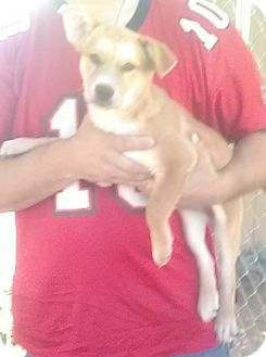 Husky Mix Puppy for adoption in Staunton, Virginia - Lois