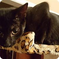 Adopt A Pet :: Cookie - Urgent!!! - Clarksville, TN