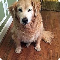 Adopt A Pet :: Shelby II - BIRMINGHAM, AL