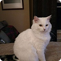 Adopt A Pet :: Celeste - Spring, TX