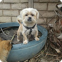 Adopt A Pet :: Slick - Van Nuys, CA