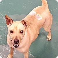 Adopt A Pet :: Honey - Waldorf, MD