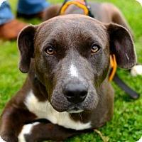 Adopt A Pet :: Bruce - Greenwood, SC