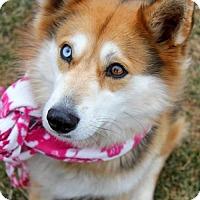 Adopt A Pet :: Nia - Arlington, VA
