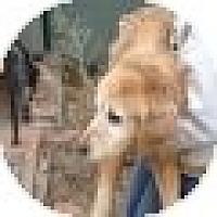Adopt A Pet :: Sassie - Denver, CO