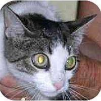 Adopt A Pet :: Gigi Gutterball - Lombard, IL
