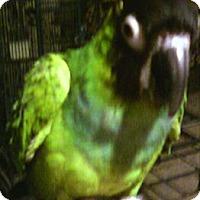 Adopt A Pet :: Machie - Lenexa, KS