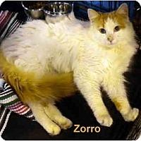Adopt A Pet :: Zorro - Jacksonville, FL