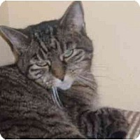 Adopt A Pet :: Bella - Bedford, MA