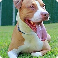 Adopt A Pet :: Romeo - Port Washington, NY