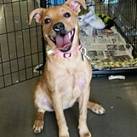 Terrier (Unknown Type, Medium) Mix Puppy for adoption in Cat Spring, Texas - Punkin