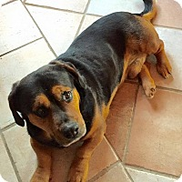 Adopt A Pet :: BJ - Wappingers, NY