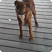 Adopt A Pet :: Yogi - Marianna, FL