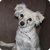 Adopt A Pet :: LuLu - Las Cruces, NM