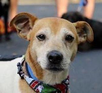 Jack Russell Terrier/Rat Terrier Mix Dog for adoption in Jasper, Georgia - Eddie