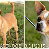 Adopt A Pet :: Churro - Siler City, NC