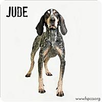 Adopt A Pet :: Jude - Troy, VA