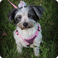 Adopt A Pet :: Cookie - Lodi, CA
