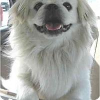 Adopt A Pet :: Sabo - Mays Landing, NJ