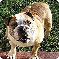 Adopt A Pet :: ROCKY-Prison Obedience Trained - Hazard, KY