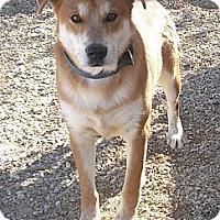 Adopt A Pet :: Kirby - Wickenburg, AZ