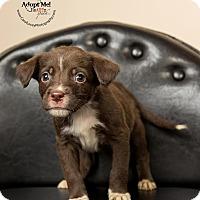 Adopt A Pet :: Cherry - Cincinnati, OH