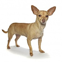Adopt A Pet :: sarah - Fort Lauderdale, FL