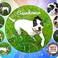 Adopt A Pet :: Eisenhower - Buffalo, IN