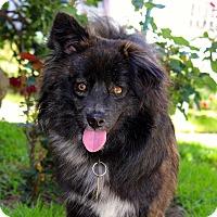 Adopt A Pet :: James - Los Angeles, CA