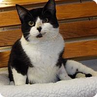 Adopt A Pet :: Big Rigg - Shelby, MI