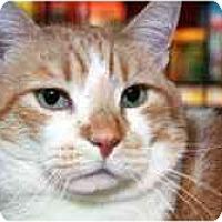 Adopt A Pet :: Morris - Pasadena, CA