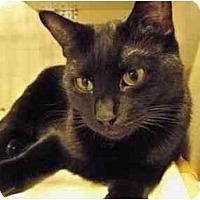 Adopt A Pet :: Prue - Secaucus, NJ
