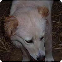 Adopt A Pet :: MADISON - Raleigh, NC