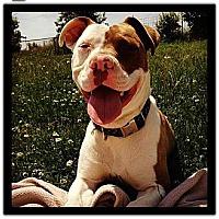 Adopt A Pet :: Bailey CP - Dayton, OH