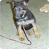 Adopt A Pet :: Jeronomoh - dewey, AZ